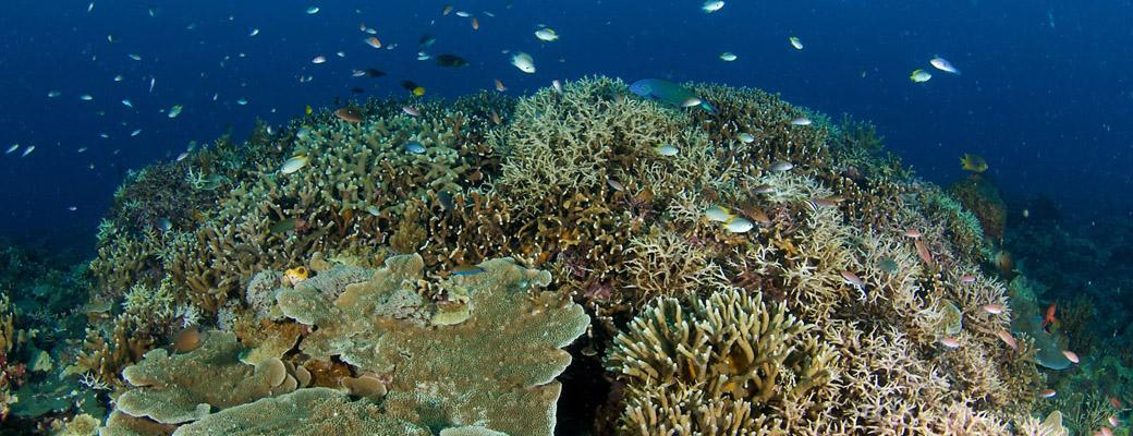 Marine Borneo